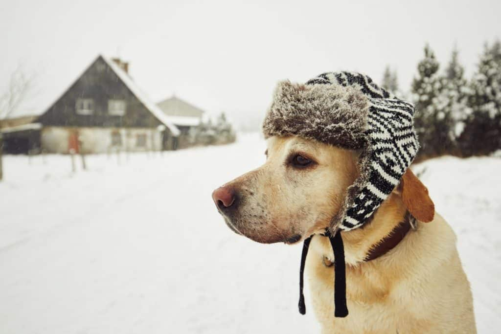 A dog in cold weather