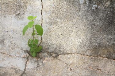 Why Does Concrete Crack? (There are actually multiple causes)