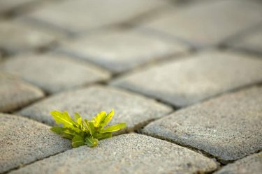 9 Ways to Permanently Stop Weeds Growing through Concrete
